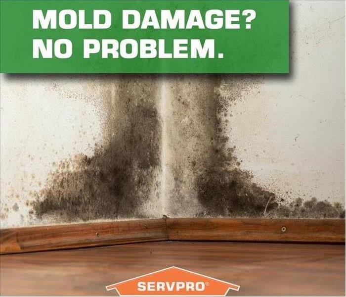 Mold Remediation Is mold in your house affecting your health?
